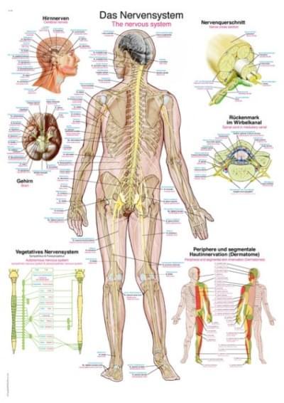 AL105 - Nervový systém