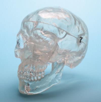 A20 / T - Priehľadná lebka
