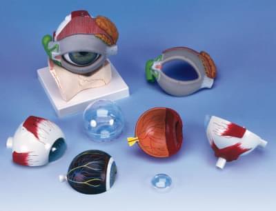 F12 - Model oka s očným viečkom a slzotvorným systémom