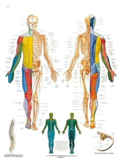 VR1621UU - Páteřní nervy