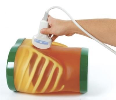 """US-1 - Výukový model """"ECHOZY"""" pro vyšetření břicha ultrazvukem"""