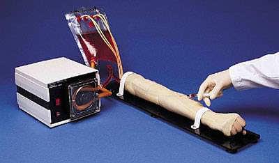 S402 - Model paže + artérie a žíly