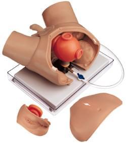 AC6 / 4 - Urologický vyšetrovací fantóm pre endoskopické výkony