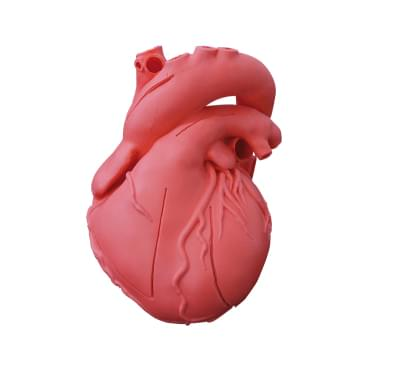 G500 - Model srdce, pružný, didaktická verze