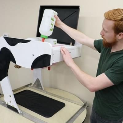 Kráva - Simulátor dojení