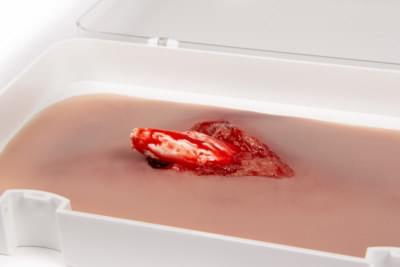 NW103 - Model otevřené fraktury nohy s funkcí krvácení