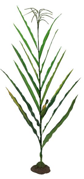 Model stonky kukurice