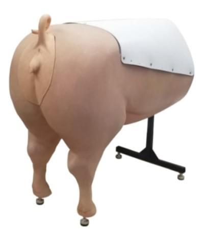 Simulátor pre oplodnenie svine