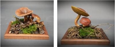 Kozák brezový - plastový model