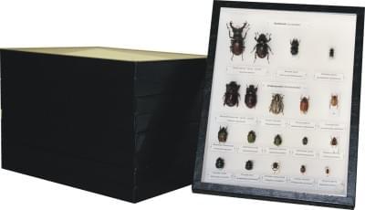 Zbierka chrobákov Českej republiky - (5 krabíc)