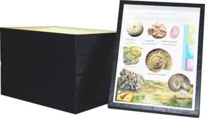 Zbierka fosílií - (4 krabice)