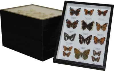 Zbierka motýľov Českej republiky - (5 krabíc)
