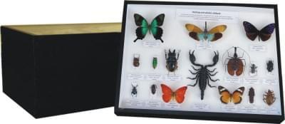 Zbierka svetového hmyzu - (5 krabíc)