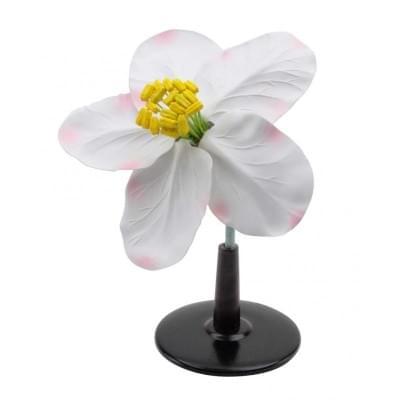 T21016 - Jabloňový květ